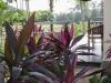 tropical_garden_house_canggu